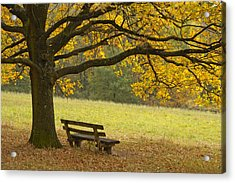 Tree And Bench In Fall Acrylic Print by Matthias Hauser