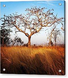 Tree And Grass Acrylic Print