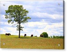 Tree And Horses Acrylic Print