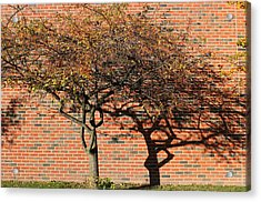 Tree And Shadow 1 Acrylic Print by Mary Bedy