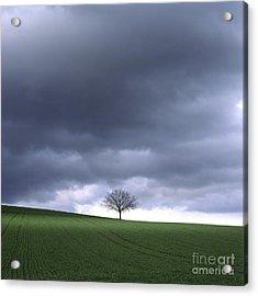 Tree And Stormy Sky  Acrylic Print