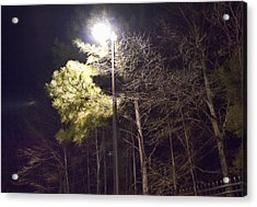 Tree And Streetlight  Acrylic Print
