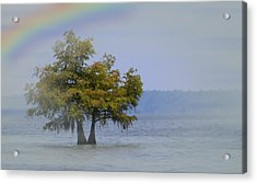 Acrylic Print featuring the mixed media Tree And The Rainbow by Bob Pardue