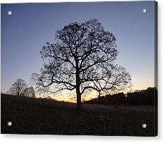 Acrylic Print featuring the photograph Tree At Dawn by Michael Porchik