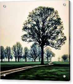 Tree At Dawn On Golf Course Acrylic Print