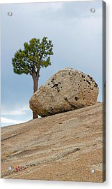Tree At Olmsted Point Yosemite National Park California Acrylic Print by Christine Till