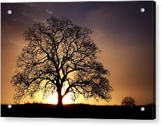 Tree At Sunrise In The Fog Acrylic Print