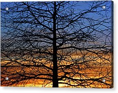 Tree At Sunset Acrylic Print by Daniel Woodrum