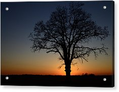Tree At Sunset Acrylic Print by Michael Donahue
