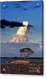 Tree At The Beach Acrylic Print by Karl Voss