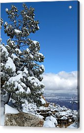Tree At The Grand Canyon Acrylic Print by Laurel Powell