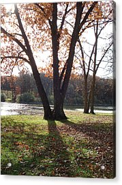 Acrylic Print featuring the photograph Tree At The Lake by J L Zarek