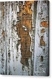 Tree Bark 2 Acrylic Print
