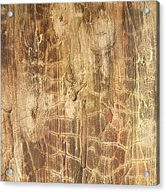 Tree Bark Acrylic Print by Alan Casadei