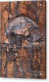 Tree Bark Design Acrylic Print
