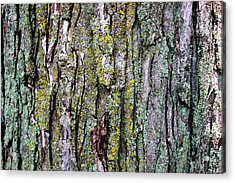 Tree Bark Detail Study Acrylic Print by Design Turnpike