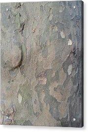 Tree Bark Acrylic Print by Jenna Mengersen