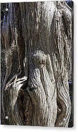Tree Bark No. 3 Acrylic Print by Lynn Palmer