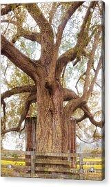 Tree Barn And Fence Acrylic Print