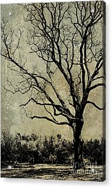 Tree Before Spring Acrylic Print