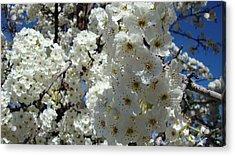 Tree Blossom  Acrylic Print by Iam Wayne