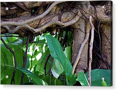 Acrylic Print featuring the photograph Tree Branch by Rafael Salazar