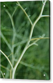 Tree Branches Abstract Green Acrylic Print by Jennie Marie Schell