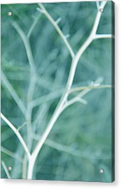 Tree Branches Abstract Turquoise Acrylic Print by Jennie Marie Schell
