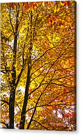 Tree Brightness Acrylic Print by Nur Roy