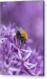 The Tree Bumblebee Acrylic Print by Tim Gainey
