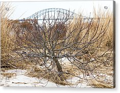 Tree By Captree Bridge Acrylic Print