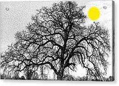 Acrylic Print featuring the photograph Tree By Moon Light by Wanda Brandon