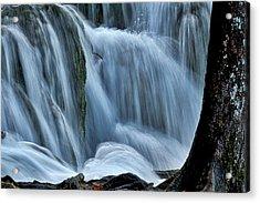 Tree By The Cascades Acrylic Print