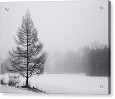 Tree By The Snowy Lake Acrylic Print