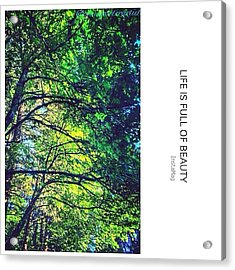 Tree Canopy From My Afternoon Walk Acrylic Print