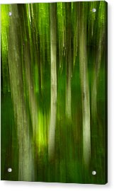 Acrylic Print featuring the photograph Tree Canopy by Serge Skiba