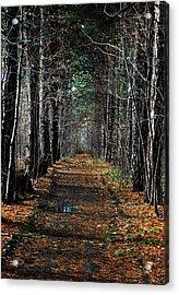 Tree Chute Acrylic Print