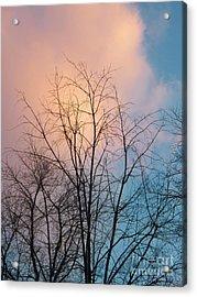 Tree Cloud Acrylic Print by Judy Via-Wolff