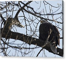 Tree Eagle Acrylic Print by Valerie Wolf