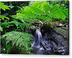 Tree Fern And Waterfall Acrylic Print by Thomas R Fletcher