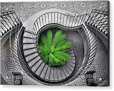 Tree Fern In The Stairs Acrylic Print by Daniel Furon