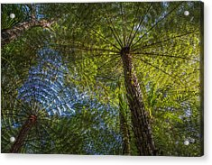 Tree Ferns From Below Acrylic Print