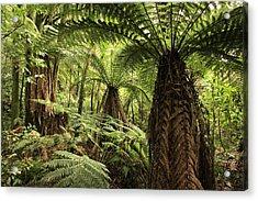Tree Ferns Acrylic Print by Les Cunliffe