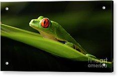 Tree Frog 7 Acrylic Print by Bob Christopher
