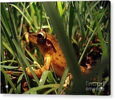 Acrylic Print featuring the photograph Tree Frog Chorus by Megan Dirsa-DuBois