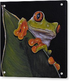 Tree Frog Peeking At You Acrylic Print