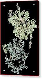Tree Fungus Acrylic Print