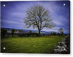 Tree - Hadrian's Wall Acrylic Print