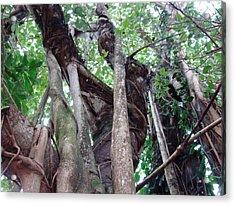 Tree Hugger 3 Acrylic Print by Van Ness