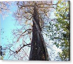 Tree Hugger 4 Acrylic Print by Van Ness
